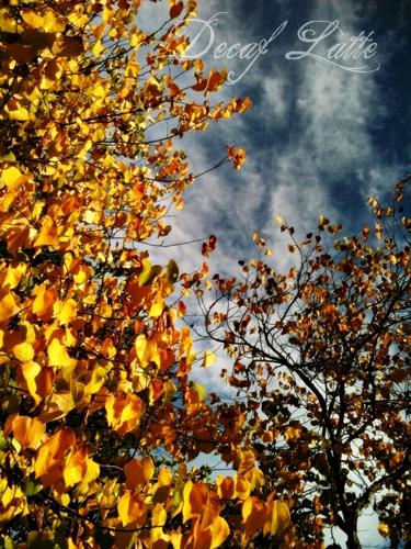 Fall walk 4