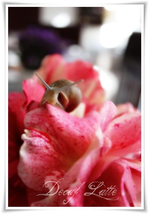 May snail