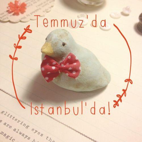 DL birds Temmuzda istanbulda